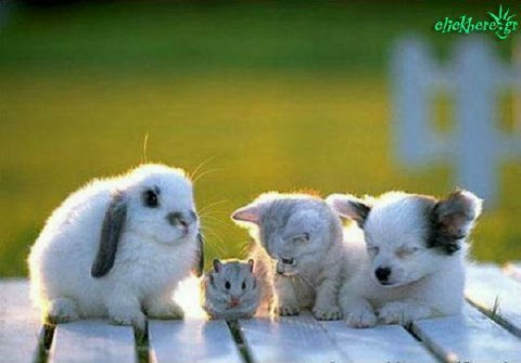 animals-groupshot98876.jpg