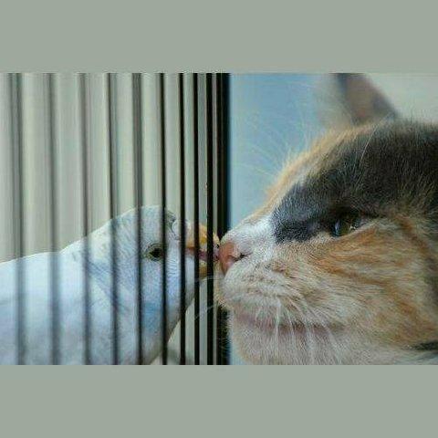 catandbird76549.jpg