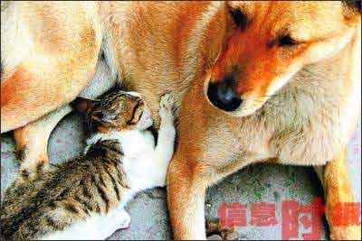 chinadogcat4.jpg