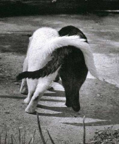 dogfriendswalking92264.jpg
